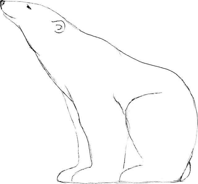 Силуэт белого медведя для рисования картинки