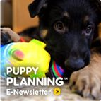 Puppy Planning E-Newsletter > teaching puppy to stay off furniture