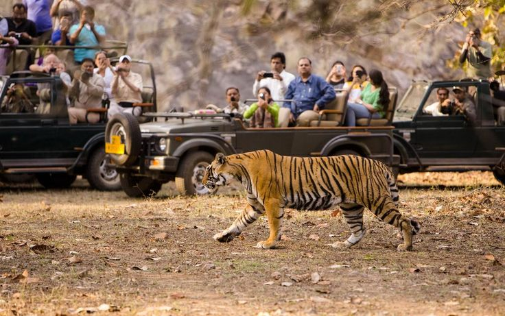 Wilderness Undefined - Ranthambore Wildlife Sanctuary in the Sawai Madhopur district of south-eastern Rajasthan is best known for its large tiger population.