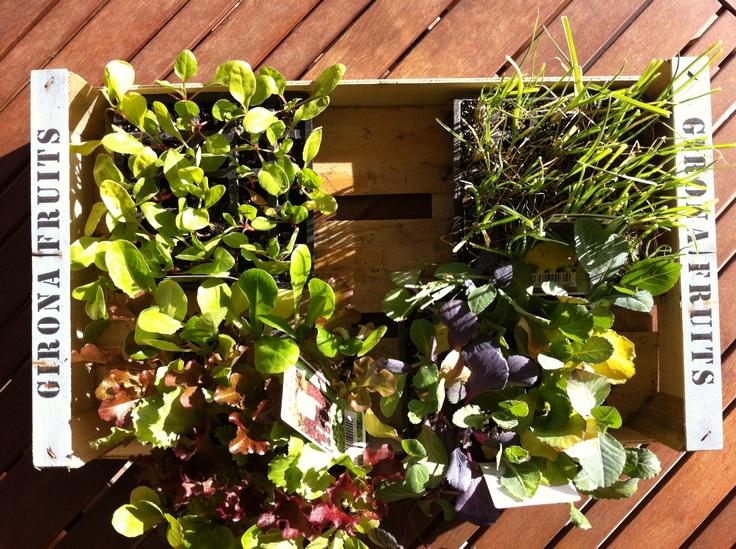 Primeras plantas para el huerto de invierno