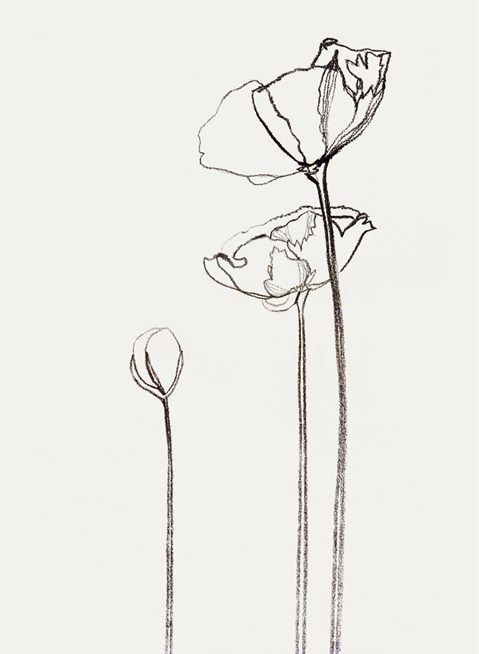 Single Line Drawing Flowers : Best ideas about flower outline on pinterest tattoo