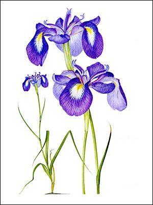 644 Best весение цветы Images On Pinterest Postcards