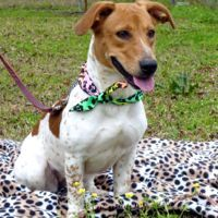 189 Best Dogs Urgent Adoption Foster Rescue Needed Images On Pinterest Animal Rescue Animal
