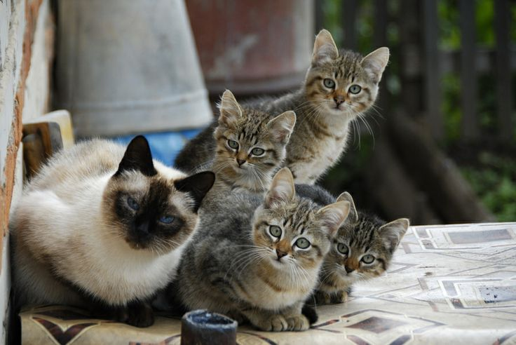 Lol...the face of the kitten in the middle is priceless. Makes you wonder what they're looking at.