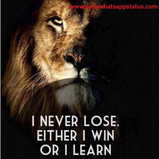Simple Whatsapp Status Warrior Quotes Lion Quotes