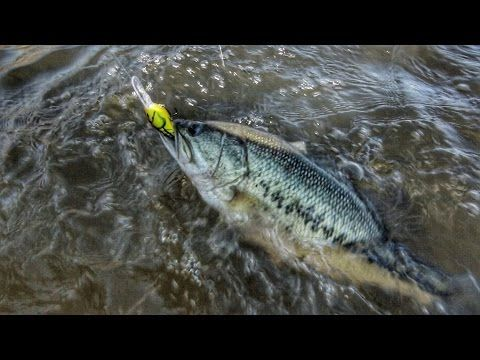 2678 best images about bass fishing how to 39 s on pinterest for Spring bass fishing