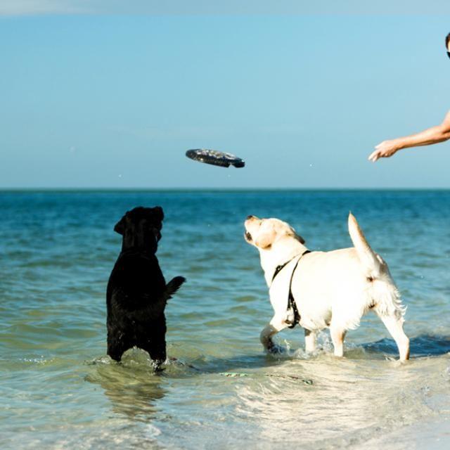 46 Best Florida Pet Friendly Images On Pinterest