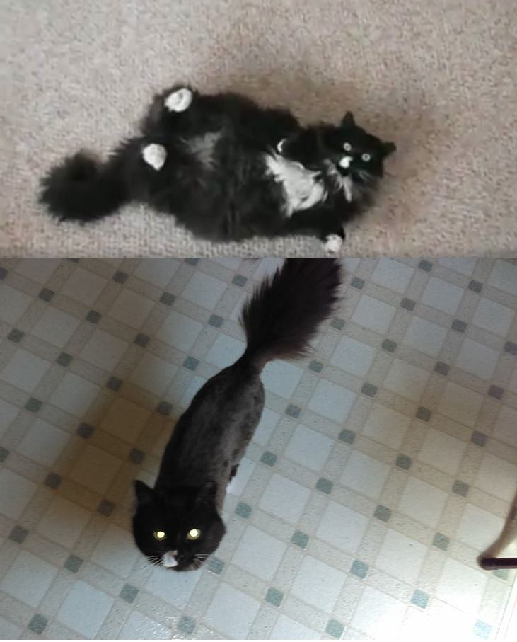 Someone went to the groomers for her summer shave today.   http://ift.tt/1XCWgD7 via /r/cats http://ift.tt/1XCWLwV  cats funny pictures