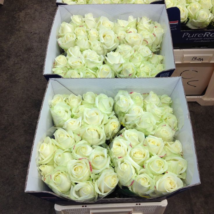 Bucket of 'Avalanche' Roses.  Sold in bunches of 10 stems from the Flowermonger.
