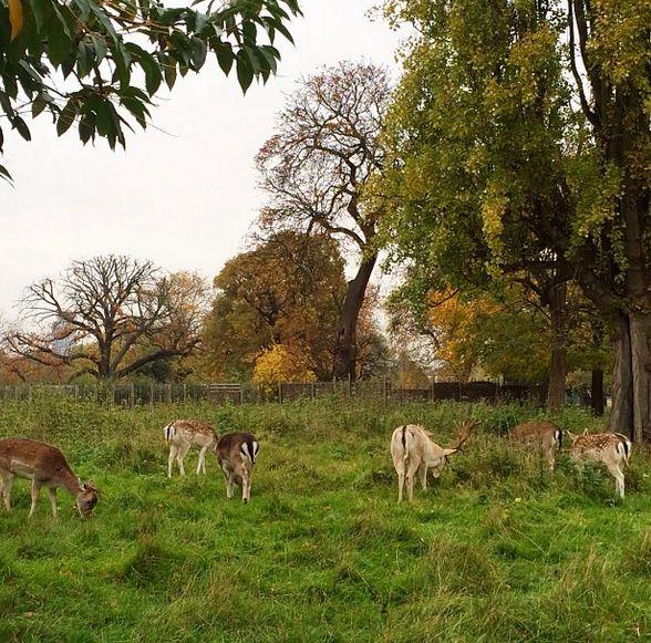 deer in Clissold Park