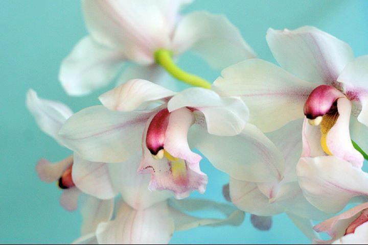 Have a nice day, you all ・*:.。. ♡loυё♡.。.:*・゜ Buona giornata, a tutti voi ・*:.。. ♡loυё♡.。.:*・゜ Aie un jour agréable, tu tout ・*:.。. ♡loυё♡.。.:*・