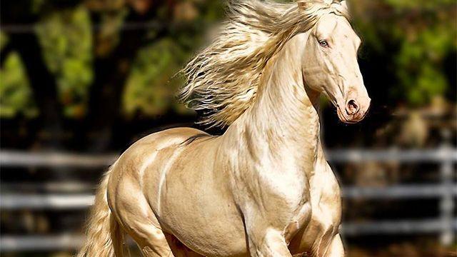 『黄金の馬、アハルテケ』荘厳な美しさに思わず息をのむ人続出!のアイキャッチ