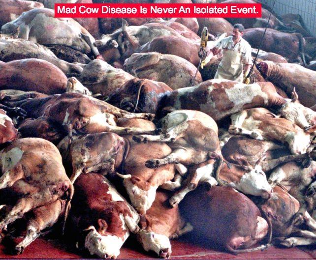 mad cow disease UK