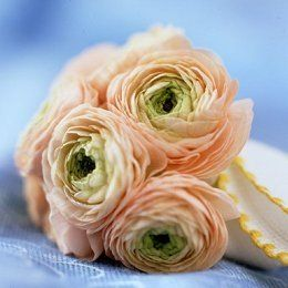 Ranunculus. Moss and blush colored?! Perfect!