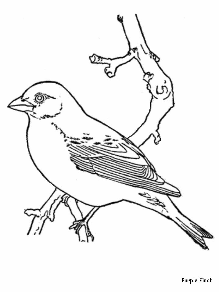 Pictures Reticent Bird Coloring Pages