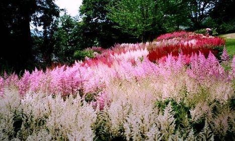 Nekonečný příběh krásných trvalek | Magazín zahrada