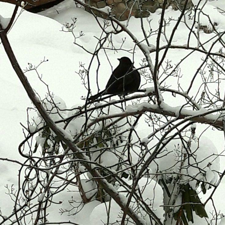 A Bird  #winter #bird#snow
