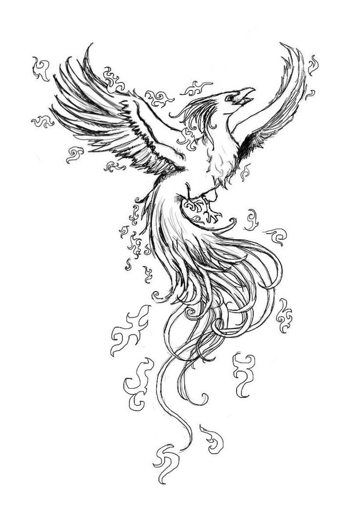 Bird Line Drawing Tattoo : Phoenix bird rising from the ashes google search