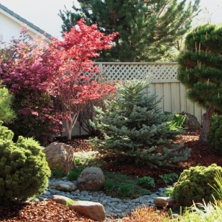 links to Water-Wise - Year round tips for keeping your yard green from the California Landscape Contractors Association  http://www.todayshomebayarea.com/articles/water-wise