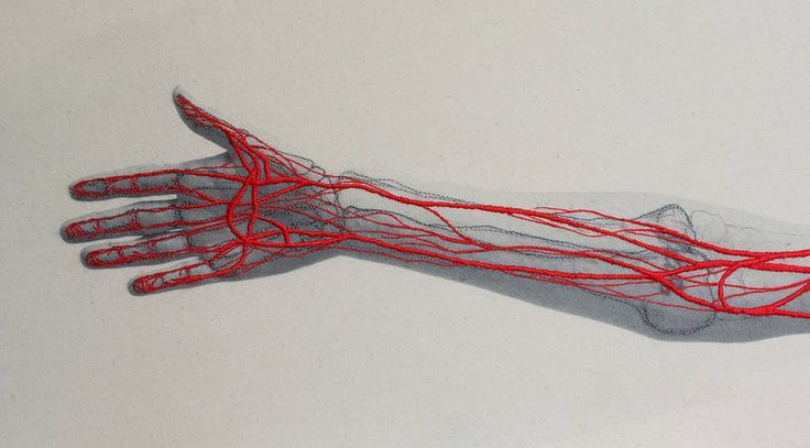 Anatomical Embroideries Series