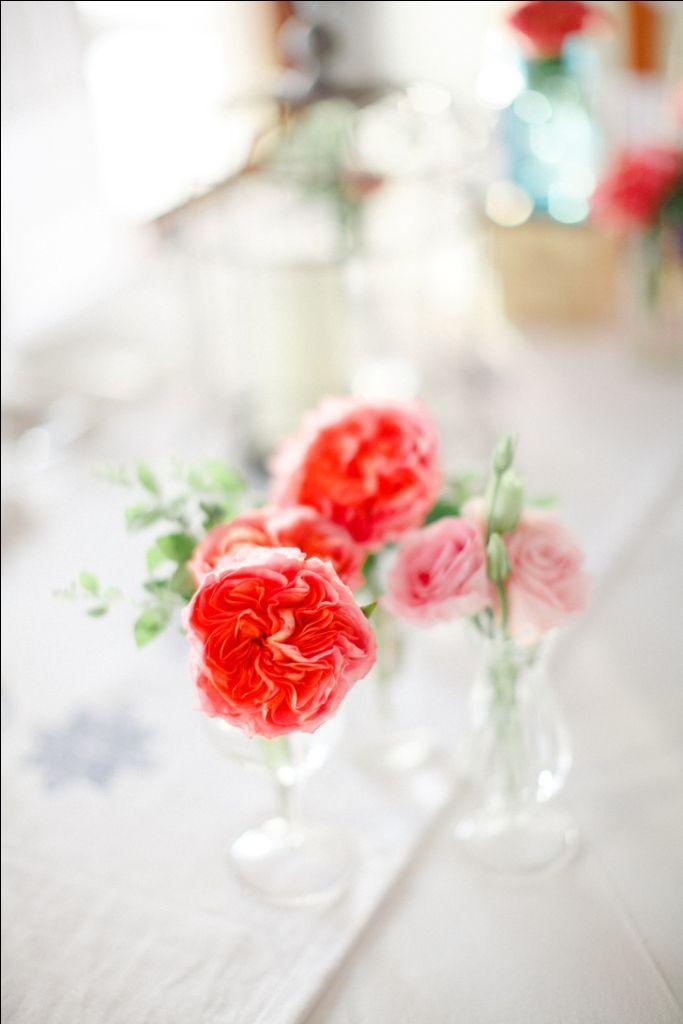 Coral David Austin and Soft Pink Rose