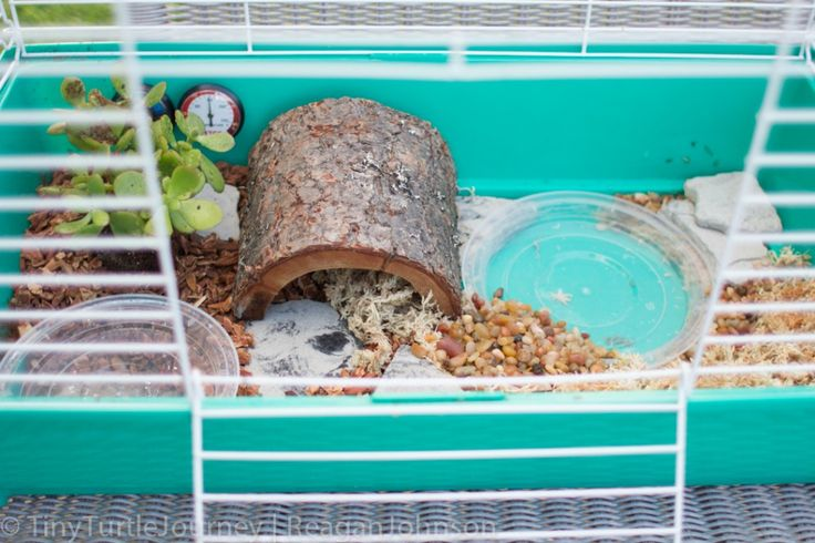... pets Pinterest Box Turtles, Box Turtle Habitat and Turtle Habitat