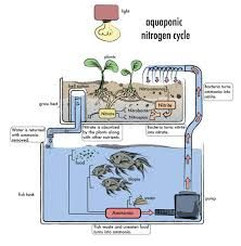 Image result for simple aquaponic system