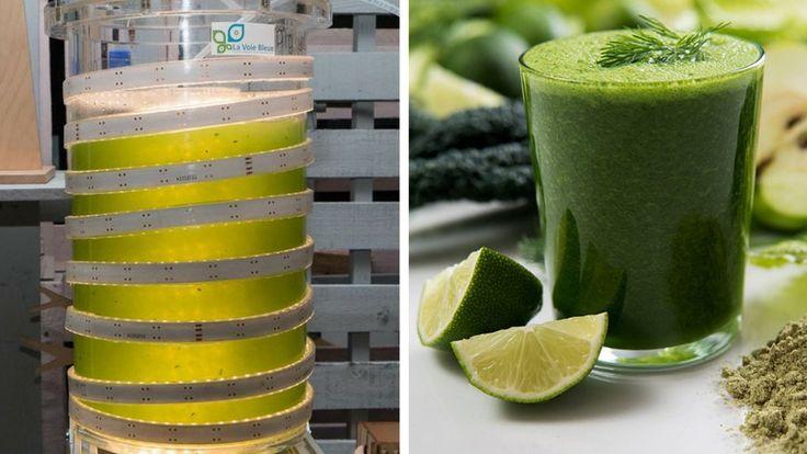 Alg&You invente l'appareil à produire de la spiruline à la maison