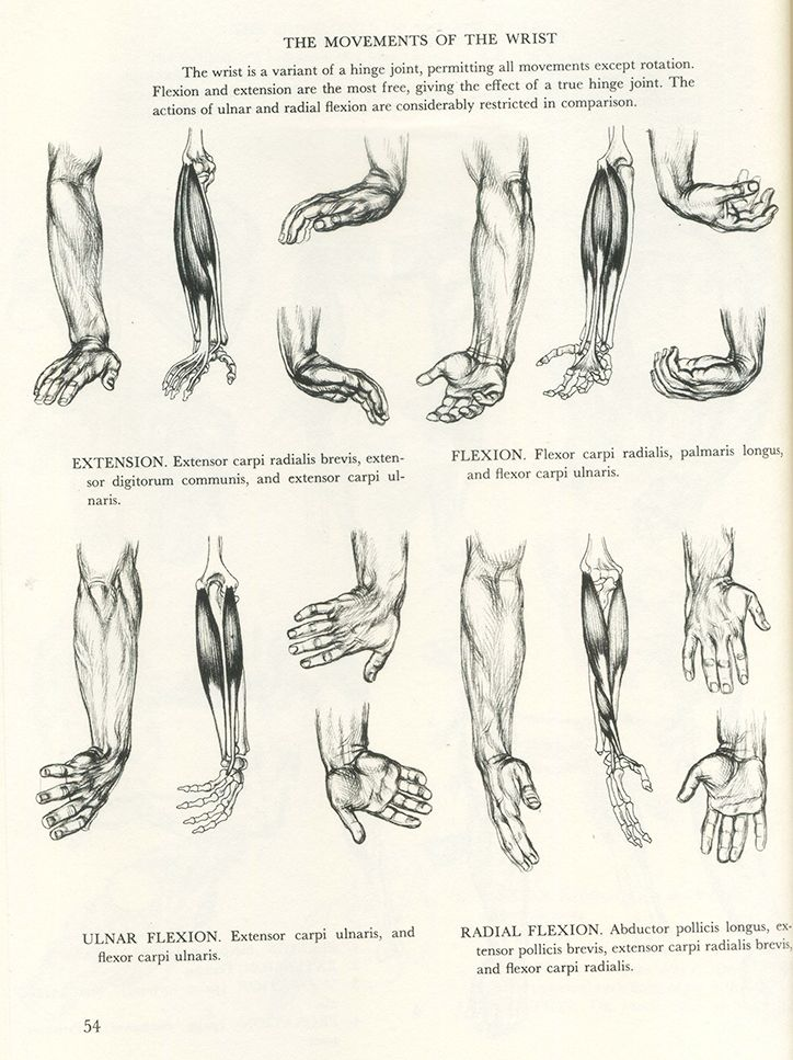 155 best Male Anatomy images on Pinterest | Anatomy reference, Human ...