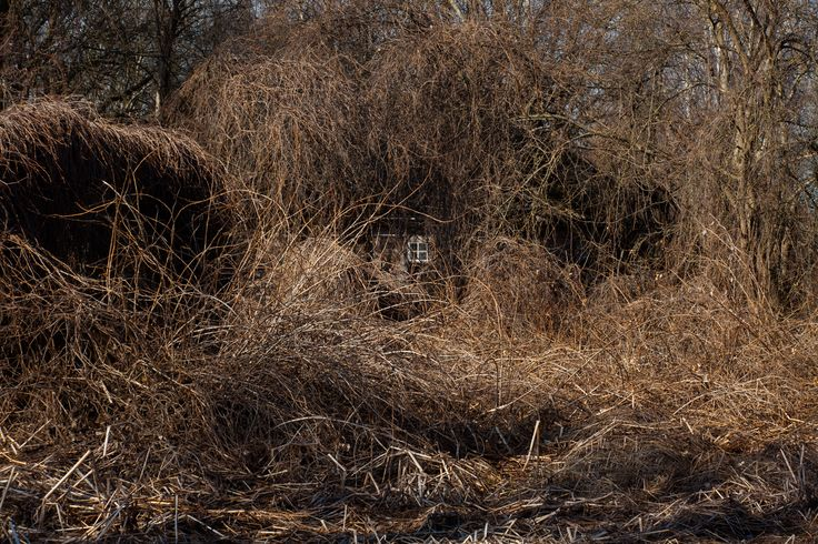 chernobyl wildlife | ... the Evacuation Zone, nature is reclaiming the deserted settlements