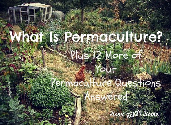 """""""Would you like a garden that produces bountiful harvest year after year without back-breaking effort?"""" What is Permaculture? Plus 12 More of Your Permaculture Questions Answered"""