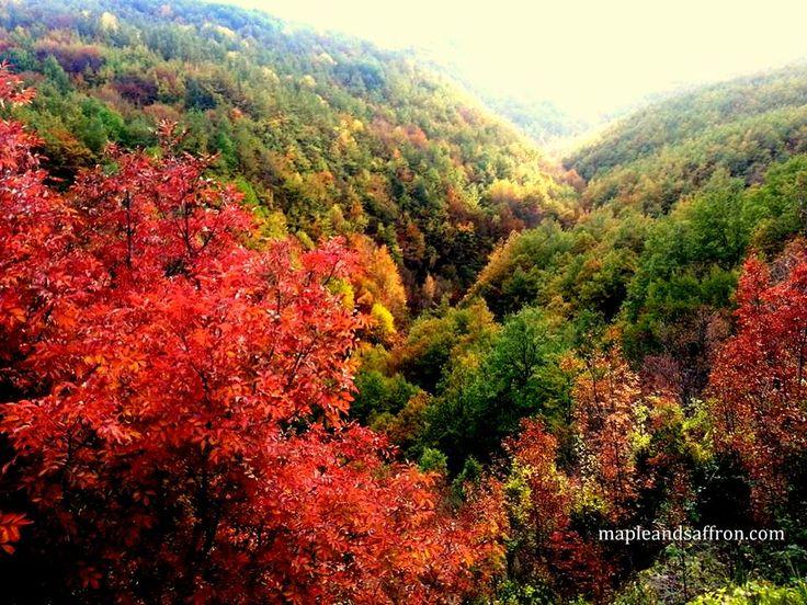Fall colours...