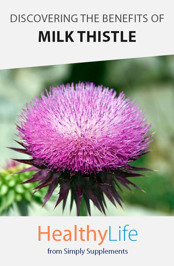 Discovering the Benefits of Milk Thistle - Healthy Life | Milk Thistle has been used in traditional herbal remedies for thousands of years. Nutritionist James C. looks at the potential benefits of Milk Thistle and the place it holds in modern nutrition.