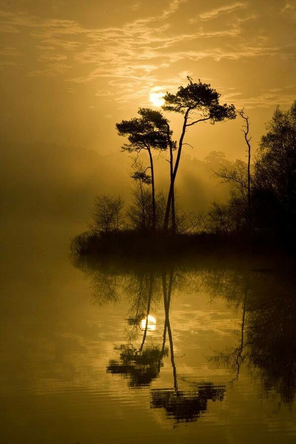 Tree sillouette by lake