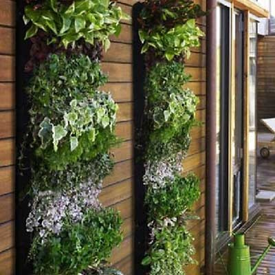 A cool living wall it 39 s a great way to add plants and for Outdoor vertical wall garden