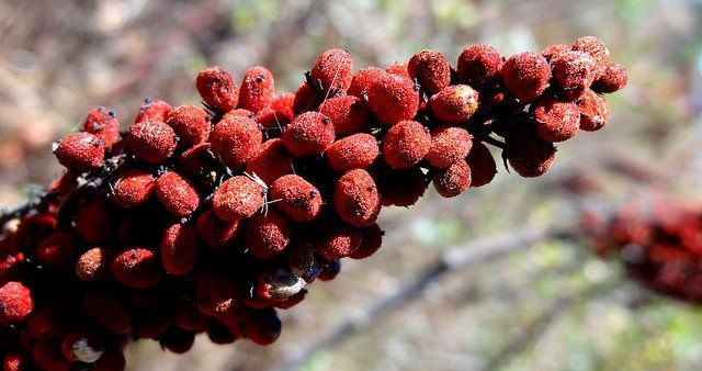 Sumac spice has a bright lemon flavor and is popular in Middle Eastern cuisine. It's delicious on roasted chicken or in vegetable and bean dips.