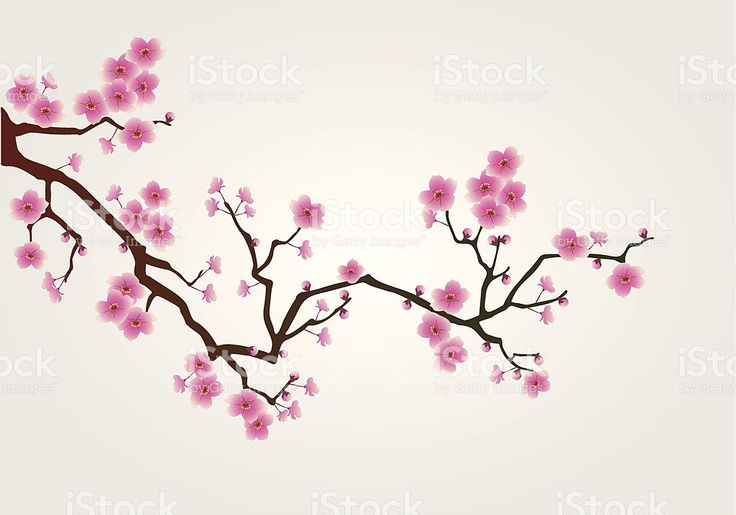illustration of japanese cherry tree blossom branch