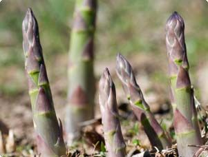 Grow asparagus in your backyard. Once you plant it once, it comes back year after year.