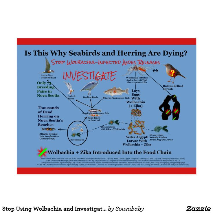 Half my royalties will fund Zika research. Wolbachia-Infected Mosquitoes Might Reduce Dengue, Enhance Zika, and Cause a Million Souls to Become Sterile: http://www.infobarrel.com/Wolbachia-Infected_Mosquitoes_Might_Reduce_Dengue_Enhance_Zika_and_Cause_a_Million_Souls_to_Become_Sterile