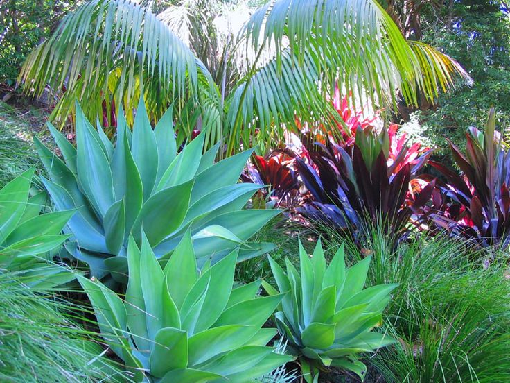 Tropical garden design ideas harmony in landscape design for Tropical landscape
