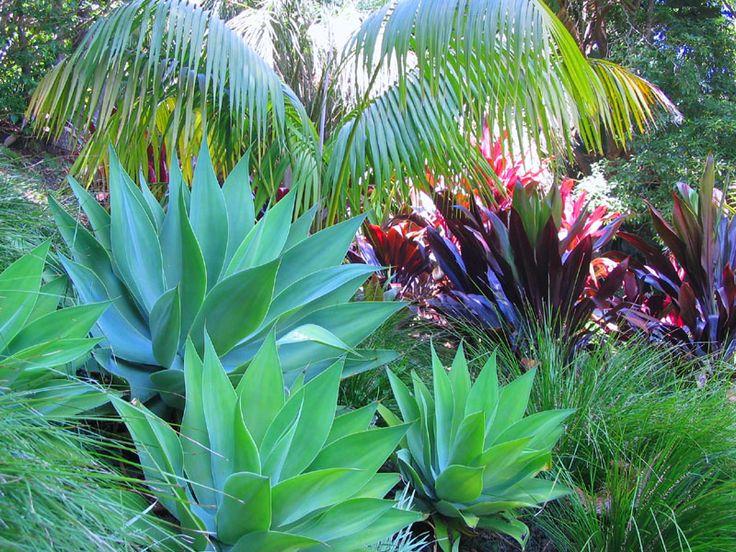 tropical garden oasis