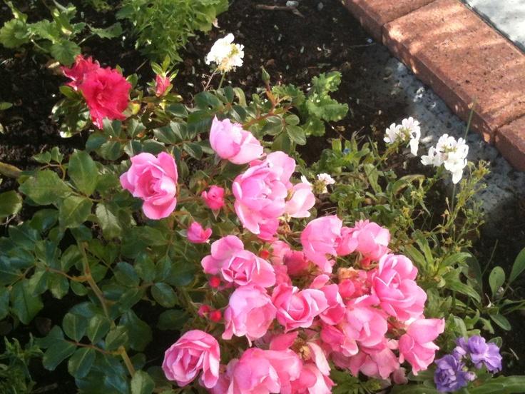 Bella Vista Vineyard Cottage even has its own wee garden :-)