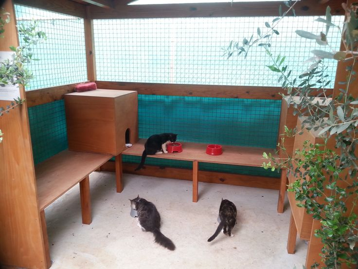 Even tireless hunters need to eat! Our cats know where to go when it's lunch time... our #CatHouse! #GrecianBay #Cyprus #AyiaNapa #CatLove #Pets #Kitty #Lunch #Hotel http://www.grecianbay.com