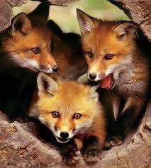 west-virginia-state-wildlife-center