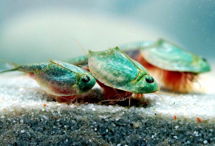 ... fish tanks on Pinterest Cichlids, Freshwater aquarium and Aquarium