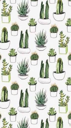 Wallpaper Cactus And Plants Resmi