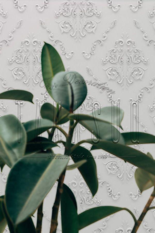 ورق حائط 3d تناسق للديكور ورق حائط مجسم Plant Leaves Plants Elements