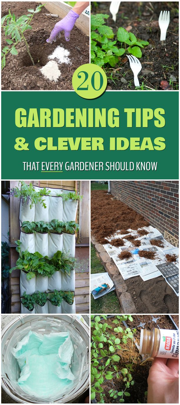 20 Gardening Tips and Clever Ideas That Every Gardener Should Know