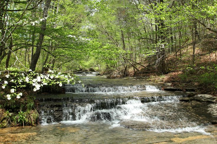 rural land for sale greene county tennessee | Cotton Branch Tract