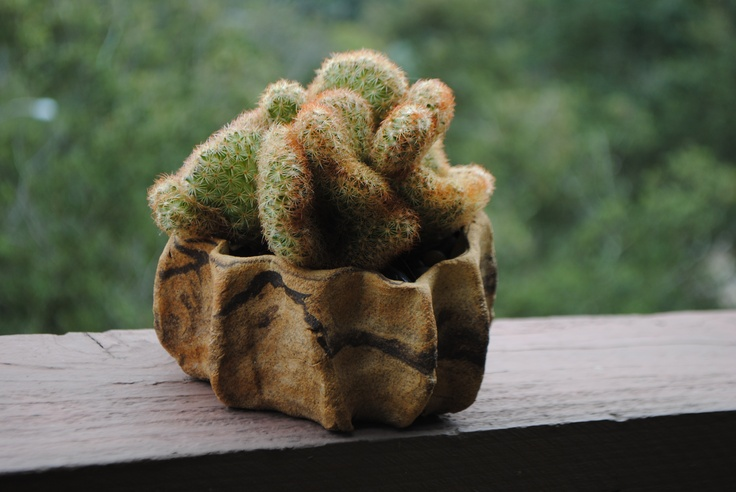 I love how Debra Lee Baldwin echoes the colors and shape of the succulent with its container.